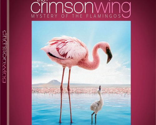 Updated: Disneynature Oceans and The Crimson Wing Blu-ray Release Date and Details