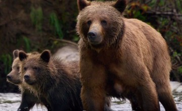 disneynature-bears-bluray