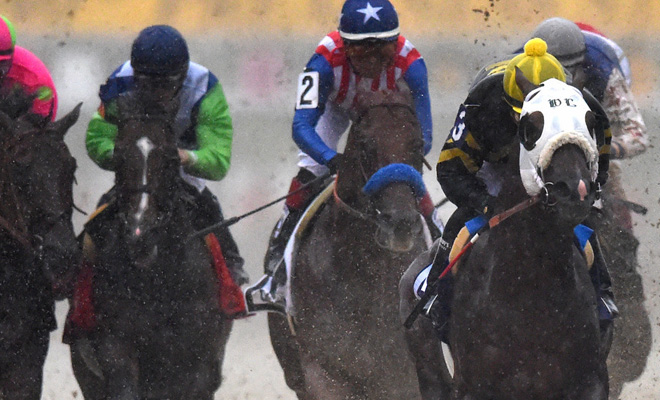 odds on preakness horse race
